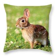 Cottontail Throw Pillow