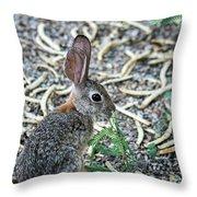 Cottontail Rabbit 4320-080917-1 Throw Pillow