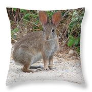 Cottontail Rabbit Surprised To Have Company Throw Pillow