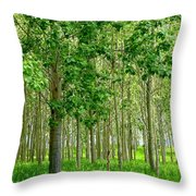 Cottonwood Grove Throw Pillow by Will Borden