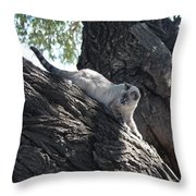 Cougar Immitation Throw Pillow