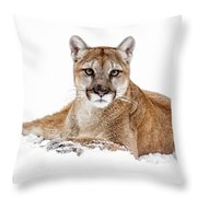 Cougar On White Throw Pillow