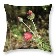 Coulter's Thistle Throw Pillow