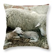 Counting Sheep Throw Pillow
