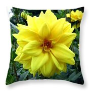 Country Dahlias Throw Pillow