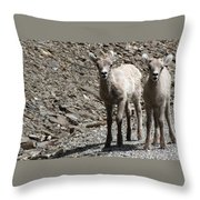 Couple Of Cuties- Baby Bighorn Throw Pillow