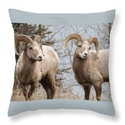 Couple Of Rams- Banff National Park Throw Pillow