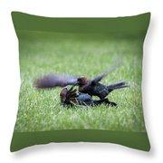 Cow Bird Fight Throw Pillow