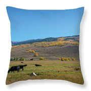 Cow Grazing In Colorado Pano Throw Pillow by Michael Ver Sprill