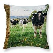 Cow Herd Throw Pillow