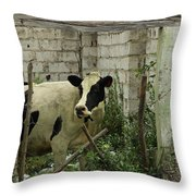Cow In A Building Throw Pillow