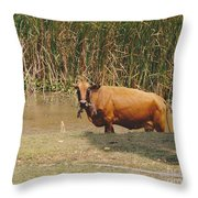 Cow In The Field Throw Pillow