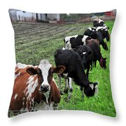 Cow Line Up Throw Pillow