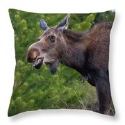 Cow Moose-signed-#4016 Throw Pillow
