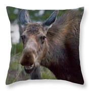 Cow Moose-signed-#4036 Throw Pillow