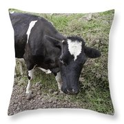 Cow Tow Throw Pillow