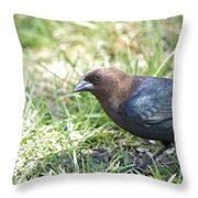Cowbird Throw Pillow