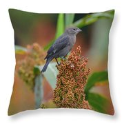 Cowbird Feasting On Milo And Shiloh Military Park In Tennessee Throw Pillow