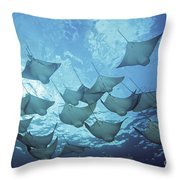 Cownose Rays Throw Pillow