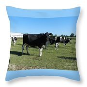 Cows In A Row Throw Pillow