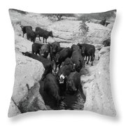 Cows In The Hole Throw Pillow