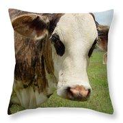 Cows8937 Throw Pillow