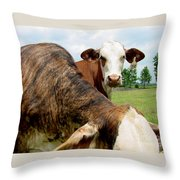 Cows8938 Throw Pillow