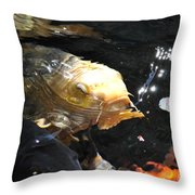 Coy Koi Throw Pillow