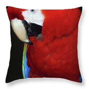 Coy Scarlet Macaw Throw Pillow