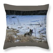 Coyote Food Hunting Throw Pillow