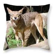 Coyote Grin Throw Pillow