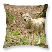 Coyote In Cades Cove Throw Pillow