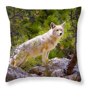 Coyote In The Rocky Mountain National Park Throw Pillow