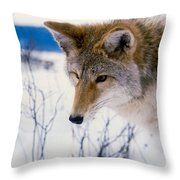 Coyote Listening  For Prey Throw Pillow