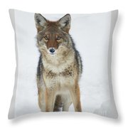 Coyote Looking At Me Throw Pillow