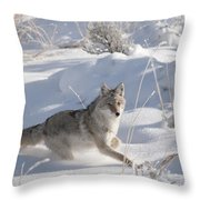 Coyote On The Move Throw Pillow