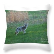 Coyote Stance  Throw Pillow