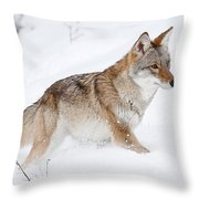 Coyote Winter Throw Pillow