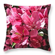 Crab Apple Blossoms 04302015-1 Throw Pillow