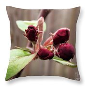 Crab-apple Tree Flower Buds Throw Pillow