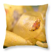 Crab Spider Head Throw Pillow