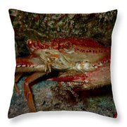 Crab With A Snack Throw Pillow