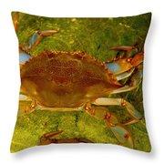 Crabby Throw Pillow
