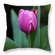 Cradled Pink Tulip Throw Pillow