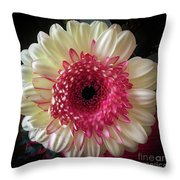 Cranberry And White Throw Pillow