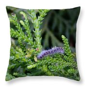 Crawlly Caterpillar Throw Pillow