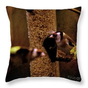 Crazy Goldfinch Throw Pillow