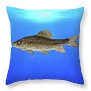 Creek Chubsucker Blue Lagoon  Throw Pillow