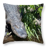 Creeping Up On You Throw Pillow