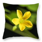 Creeping Woodsorrel Square Throw Pillow